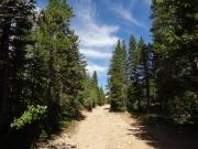 between_trees