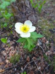 forest_flower