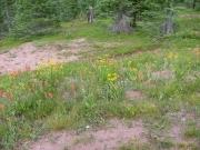wild_flowers_part_1