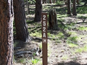 forest_road_sign