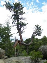 crazy_tree