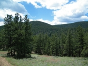meadow_view