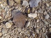 fallen_aspen_leaf