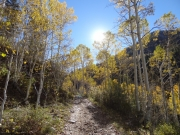 sun_through_aspens