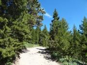 healthy_trees