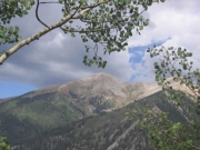 view_through_aspen_trees