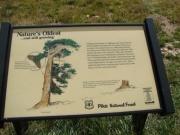 bristlecone_pine_sign