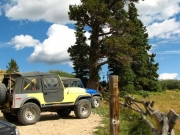 jeeps_and_bristlecone_pine