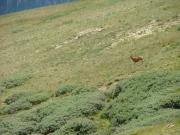 deer_part_2