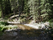 trail_in_the_creek