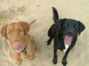 dogs_happy