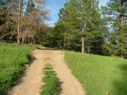 green_trail