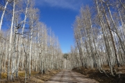cut_through_aspens