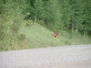 deer_1_part_1