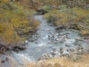 peru_creek_part_5