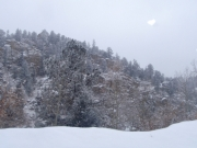 snow_on_trees_part_1