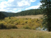 marshy_meadow