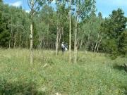 dead_end_meadow