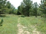 trail_through_a_meadow