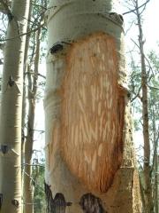 tree_weirdness_part_2