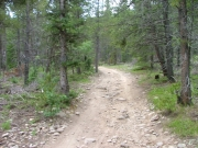 rocky_trail_through_the_pine_trees