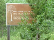 sign_about_aspen_trees
