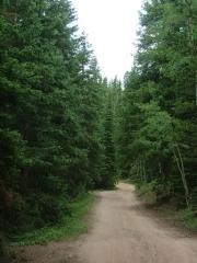 through_the_trees