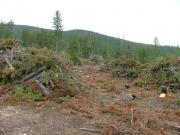 trees_cleared_part_1
