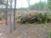 trees_cleared_part_2