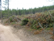 trees_cleared_part_3
