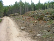 trees_cleared_part_4