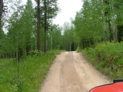 through_aspen_trees