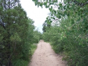 smooth_trail_through_trees