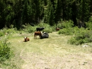 livestock_on_trail