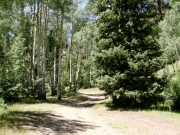 peaceful_trail