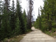 heavy_trees
