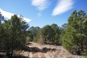 short_pines