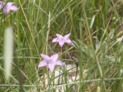 flowers_part_1