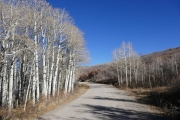 around_aspens