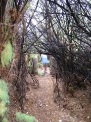 tree_tunnel