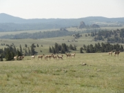 antelope_in_scenery