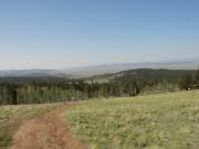 meadow_views