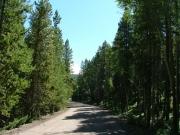 big_trees