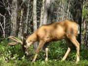 deer_part_3
