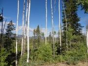 skinny_trees