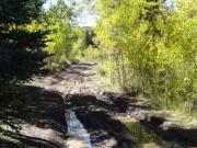 muddy_track