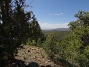 view_between_trees