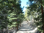 trail_in_trees