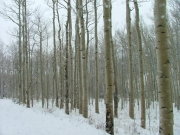 snowy_trail_part_7