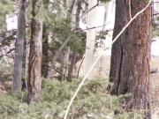 deer_hiding